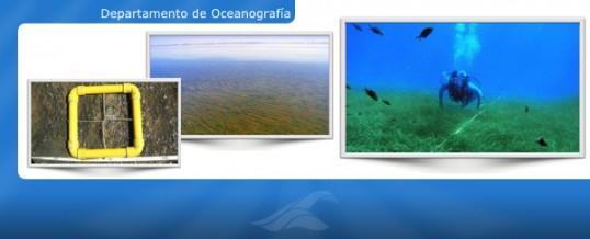 Muestreo de fanerógamas marinas